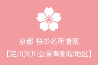 淀川河川公園背割堤地区の桜情報|2019年の開花予想から例年の見頃時期まで