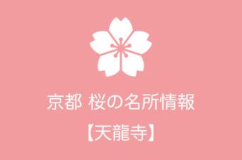 天龍寺の桜情報|2019年の開花予想から例年の見頃時期まで