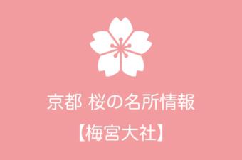 梅宮大社の桜情報|2019年の開花予想から例年の見頃時期まで