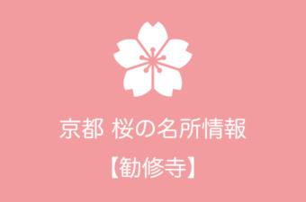 勧修寺の桜情報|2019年の開花予想から例年の見頃時期まで