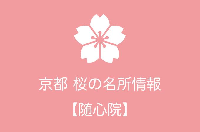 随心院の桜情報|2019年の開花予想から例年の見頃時期まで