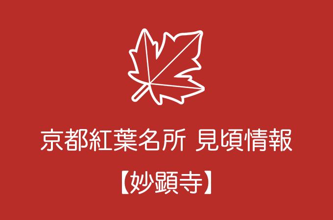妙顕寺の紅葉情報