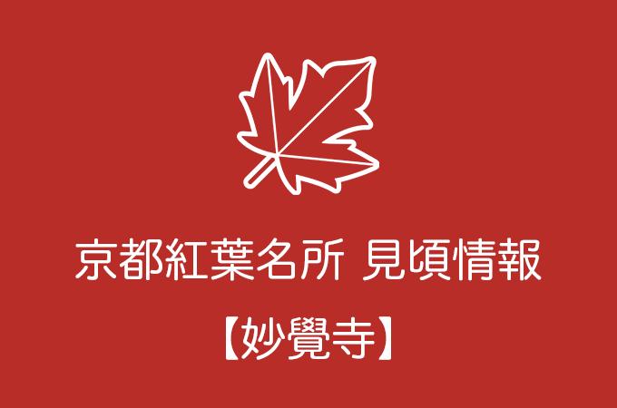 妙覺寺の紅葉情報