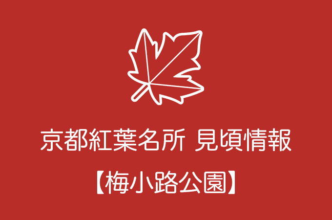 梅小路公園の紅葉情報